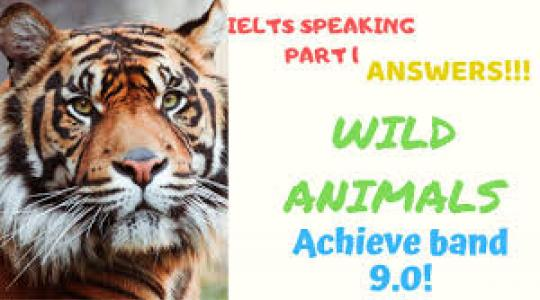 Luyện thi IELTS Reading: Animal World